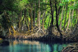 جنگل حرا 2