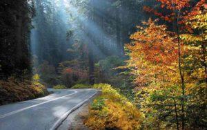 جنگل نهار خوران