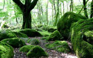 جنگل های دوهزار تنکابن