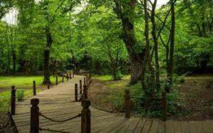 پارک جنگلی الگندره