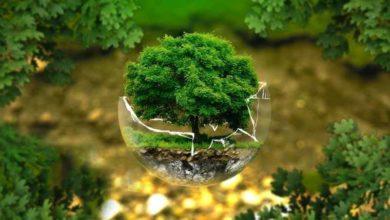 تصویر روز جهانی محیط زیست
