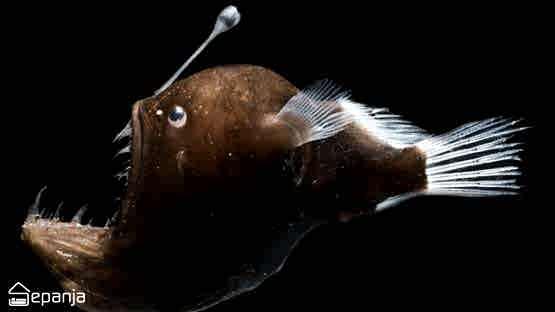 قلابجه ماهی