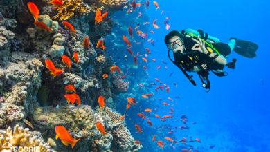 تصویر ترسناک ترین موجودات اعماق دریا را بشناسید