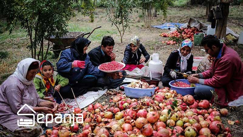 جشن انار ایرانیان
