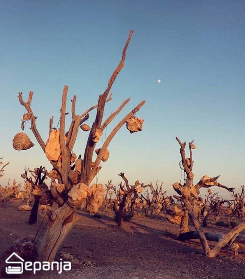 عکسی از باغ میوه سنگی