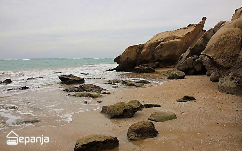 کوشنکار خلیج فارس عکس