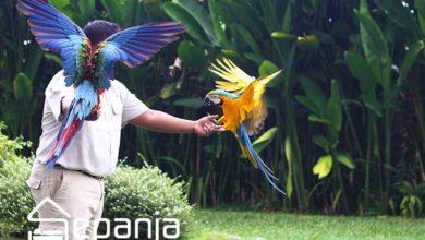 تصویر باغ پرندگان کیش ؛ بازدید از گونه هایی که تنها در مستندها می بینید!