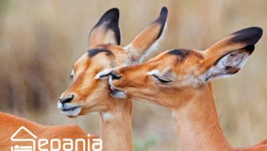 تصویر پارک آهوان کیش جاذبه ای برای عاشقان طبیعت و حیات وحش