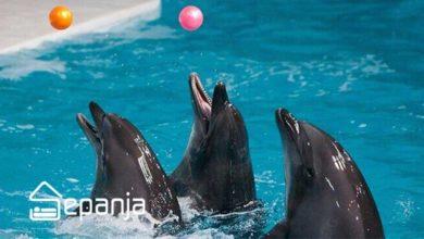 تصویر حقایقی در مورد پارک دلفین های کیش ، دلفاریوم کیش+ تصاویر واقعی