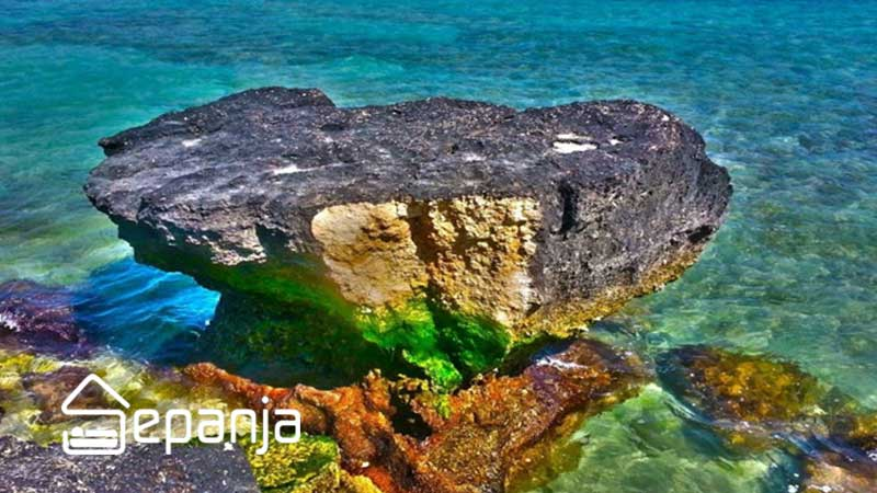 بازدید از ساحل مرجان