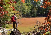 تصویر مرداب هسل ؛ جاذبه ای رنگارنگ در فصل های مختلف !