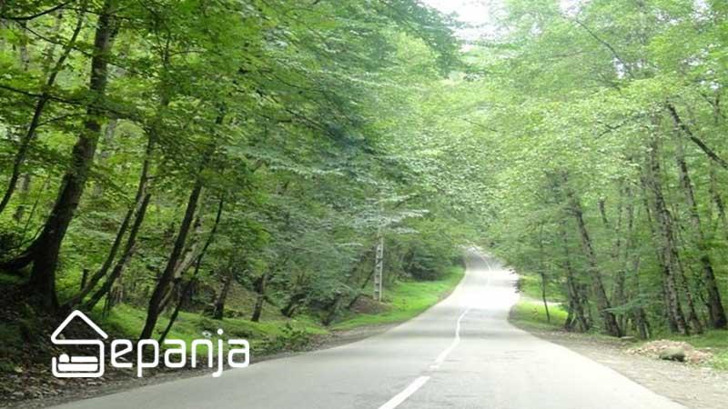 مسیر جنگل رویان مازندران