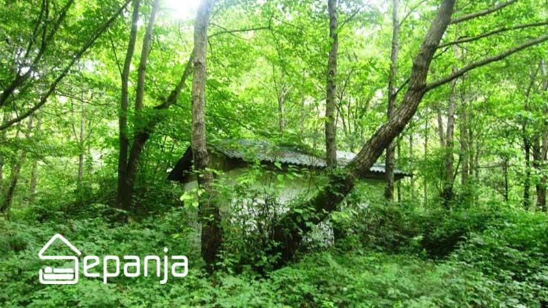جنگل رویان و آبشار آب پری در استان مازندران