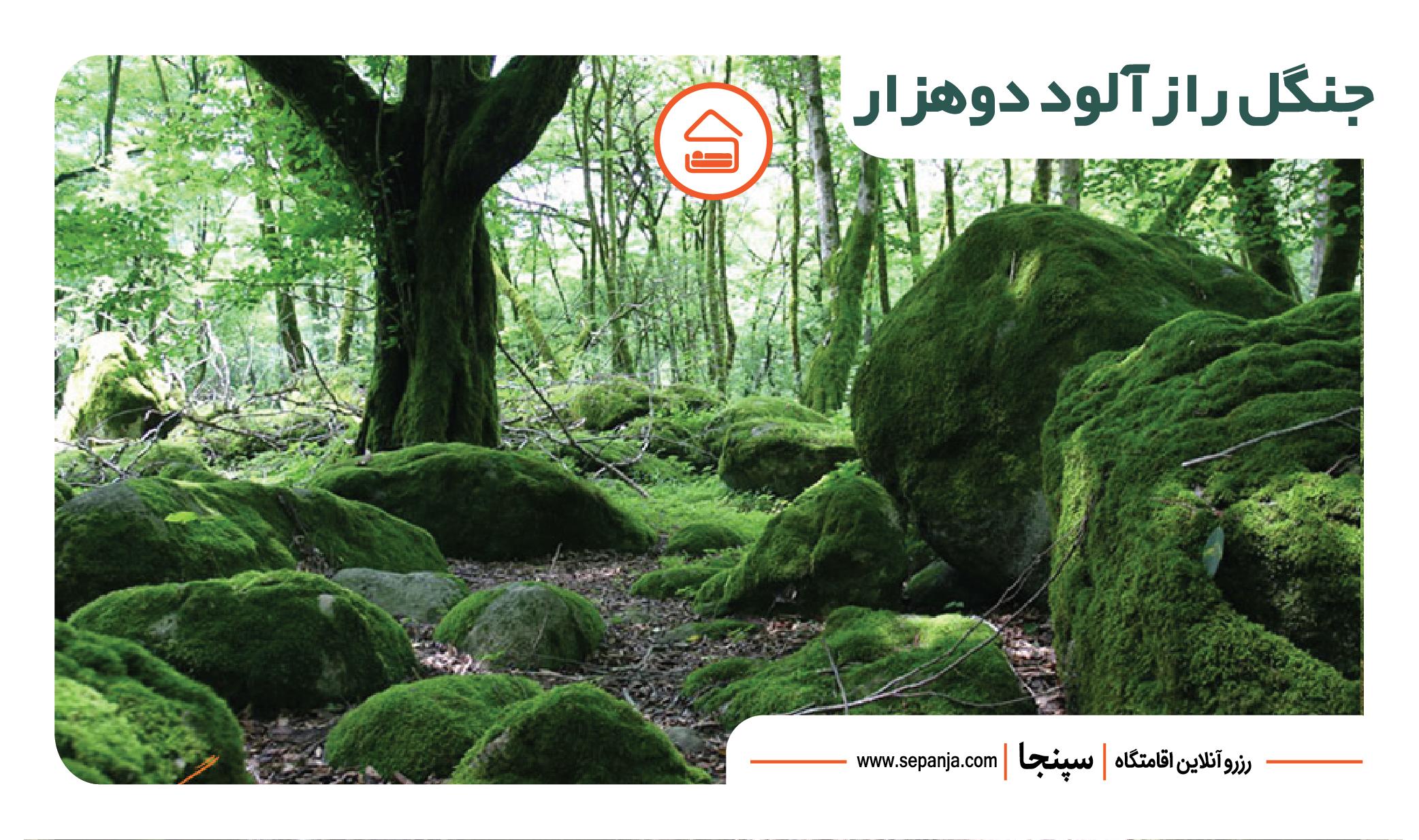 جنگل زیبای دوهزار از جاهای دیدنی تنکابن