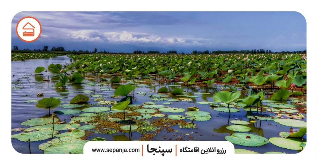 نمایی از تالاب انزلی