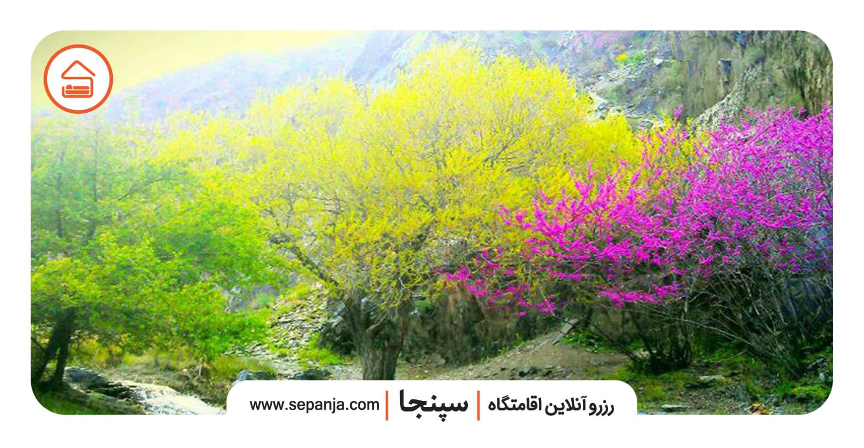 نمایی از طبیعت ارغوان دره