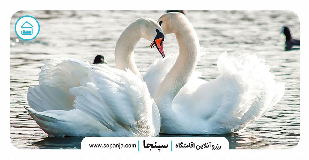 ۳.قو،-نماد-عشق-و-عاشقی