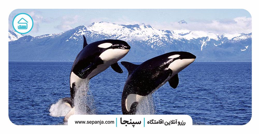۴-نهنگ-قاتل