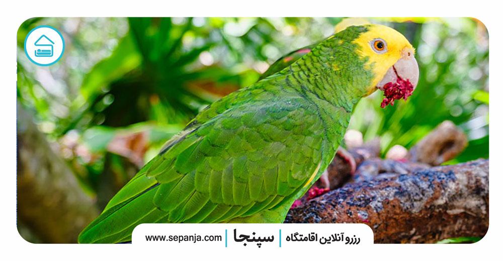 ۶-طوطی-آمازون