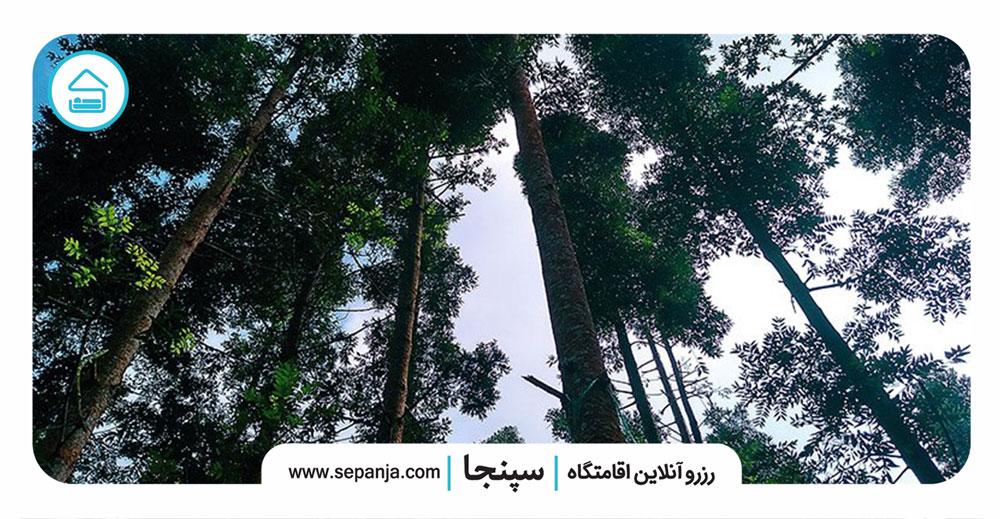 مناظر-پارک-جنگلی-شیان