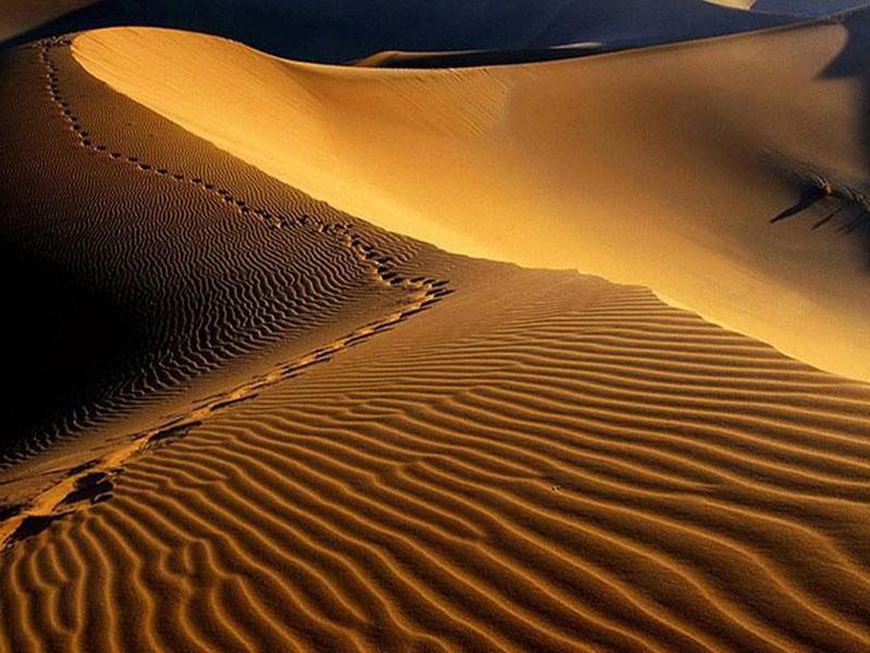 سفر به کویر مصر