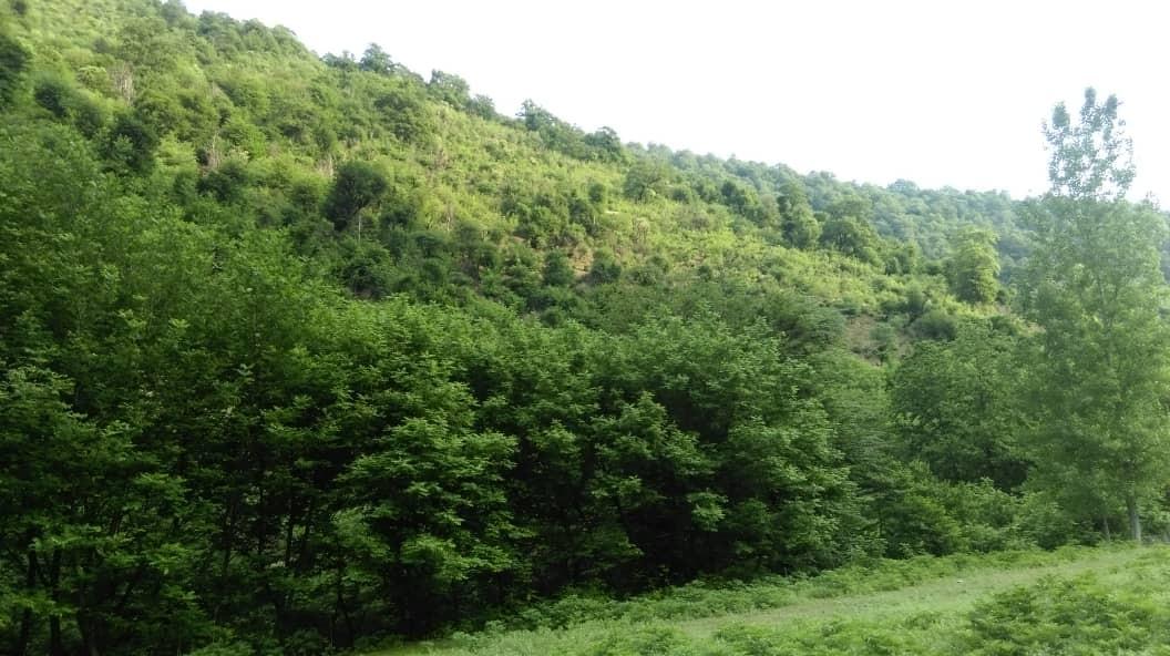 حومه شهر خانه مبله جنگلی در ماسال