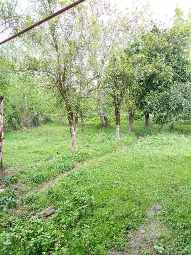 جنگلی باغ و ویلا در سیاه مرد ماسال