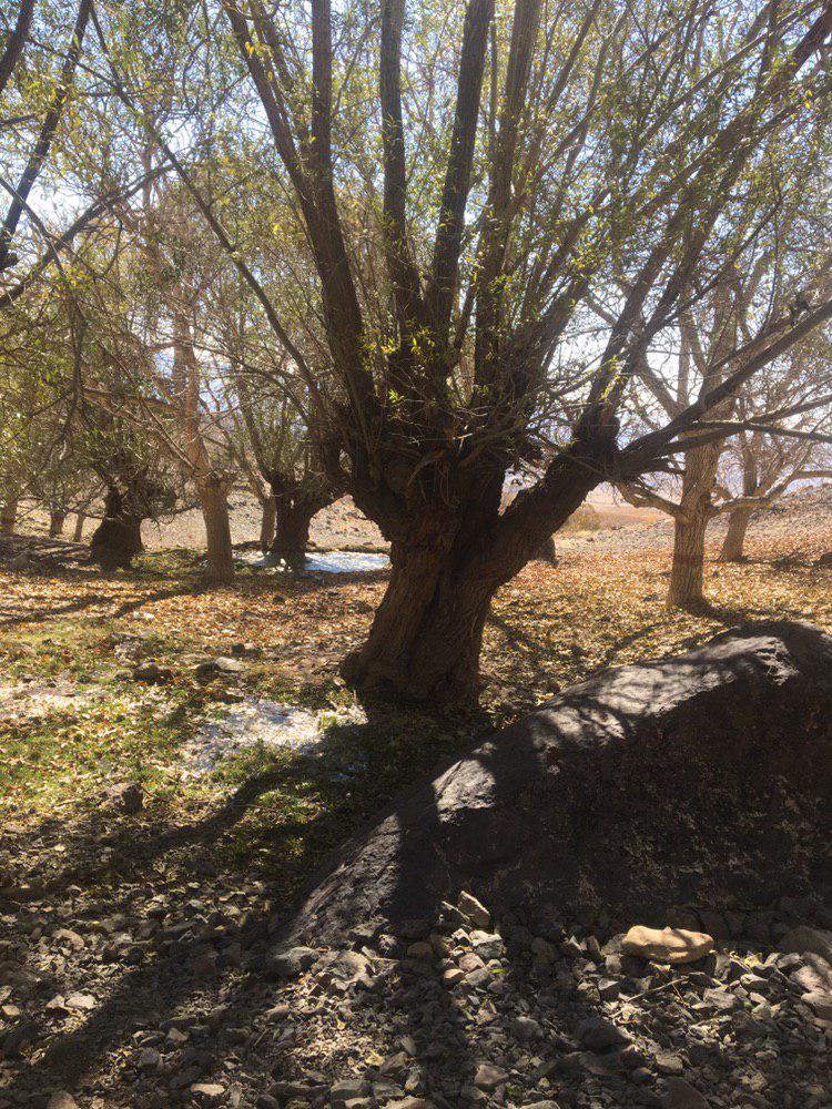 کوهستانی سوئیت ویلایی در کشه نطنز