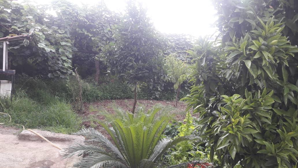 Forest سوییت باغ جنگلی در سفید تمشک رامسر