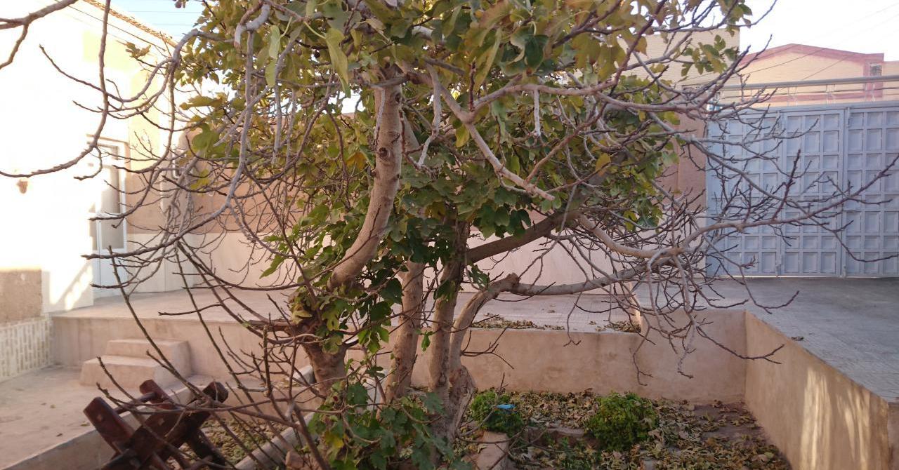 بوم گردی  اقامتگاه سنتی خانه مادربزرگ در یزد