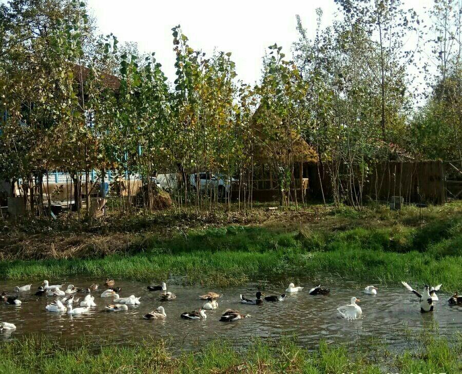 بوم گردی کلبه سنتی در اشمنان طالم رشت