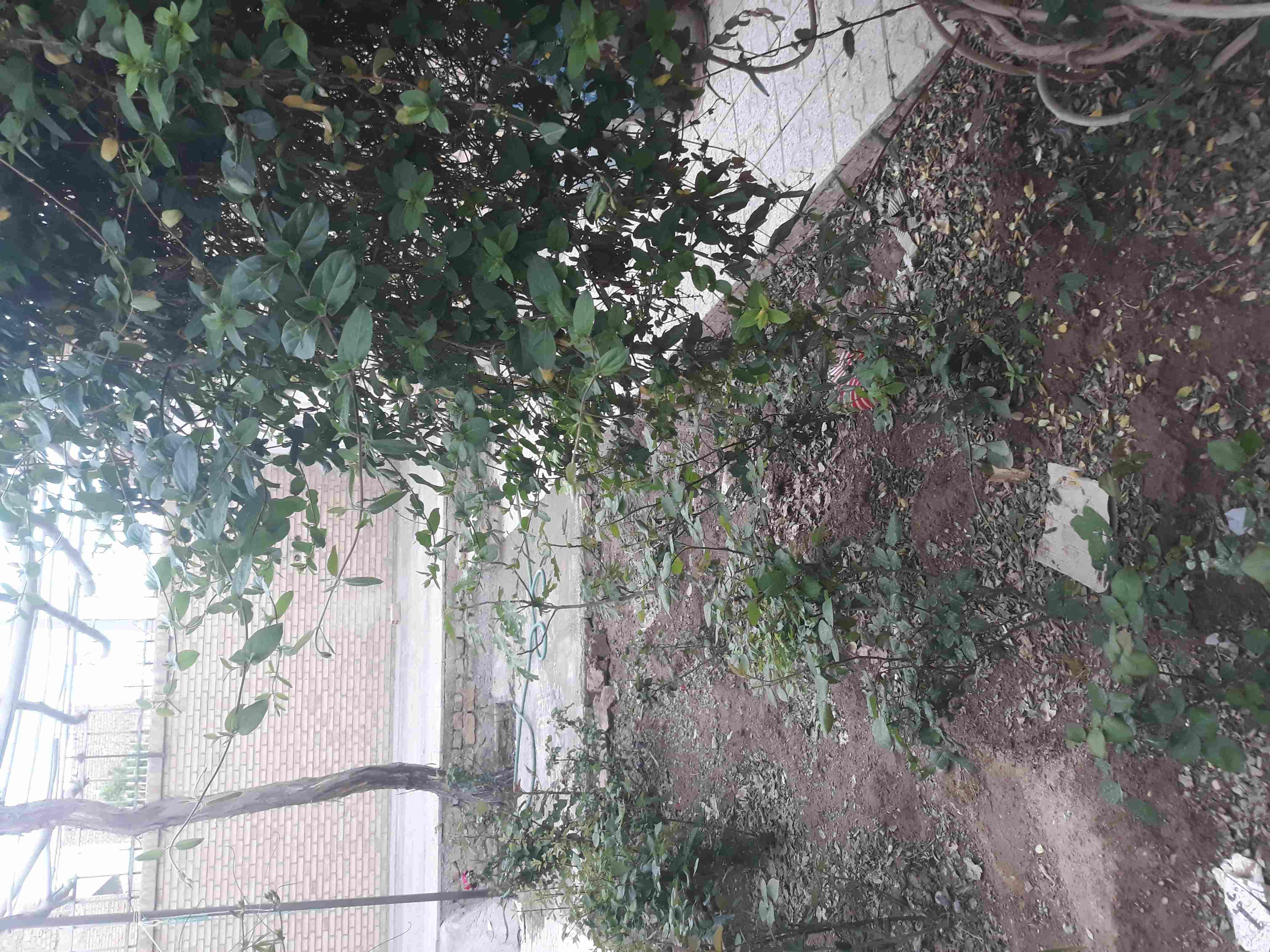 شهری منزل مبله ارزان در شهر یزد