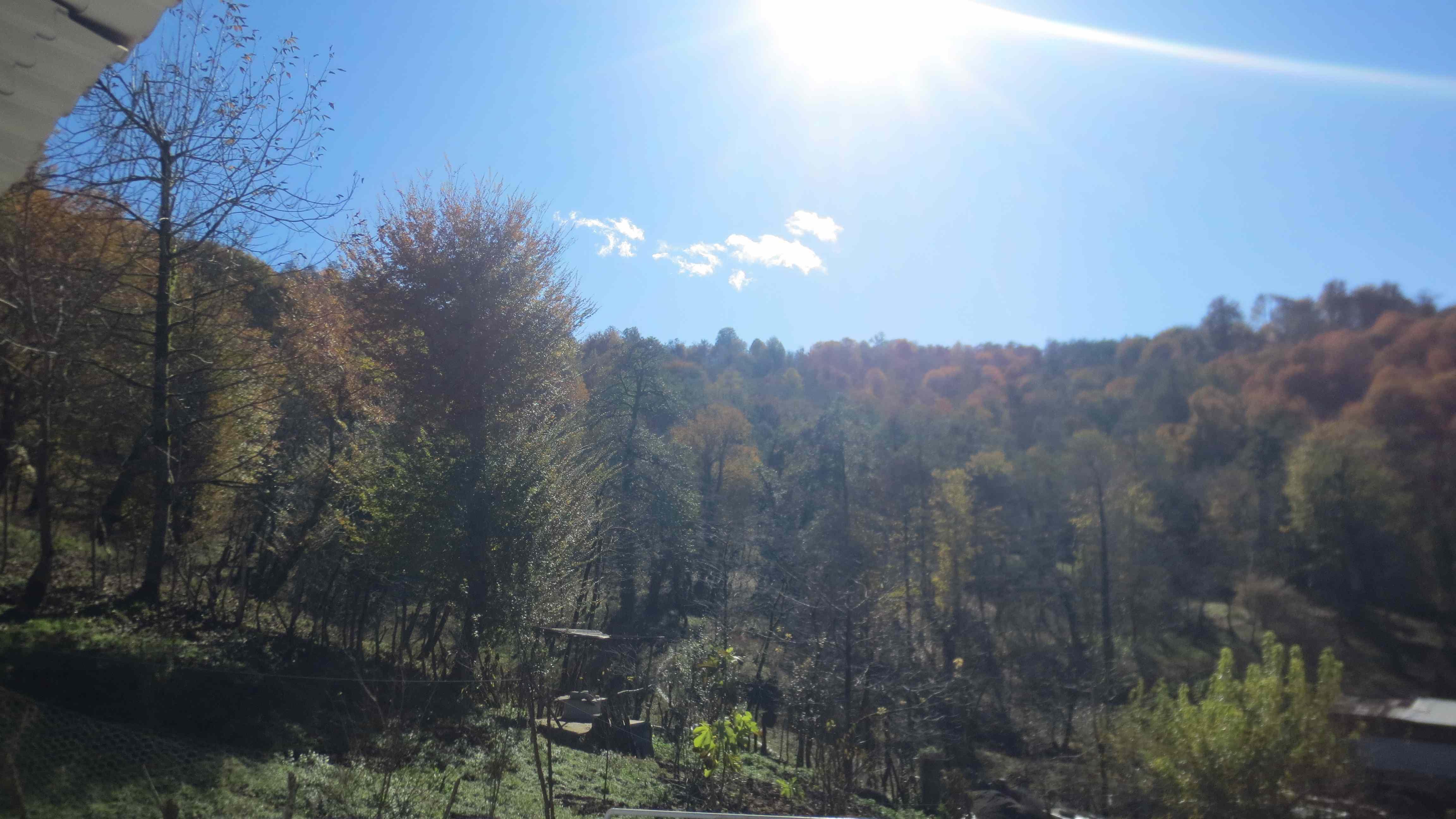 جنگلی ویلا جنگلی در درزیکلا شیرگاه