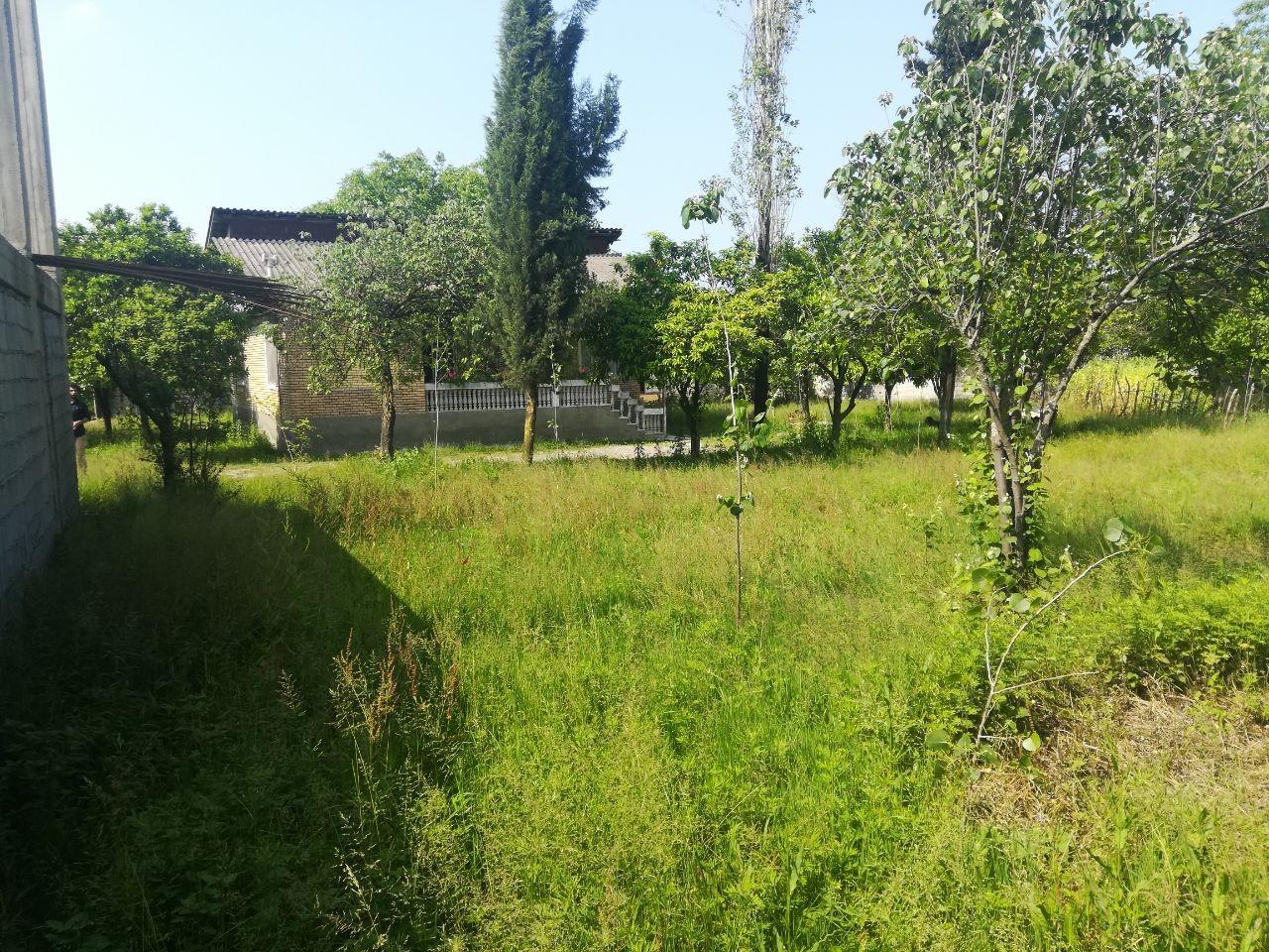 جنگلی باغ اجاره ای تمیز در تالش