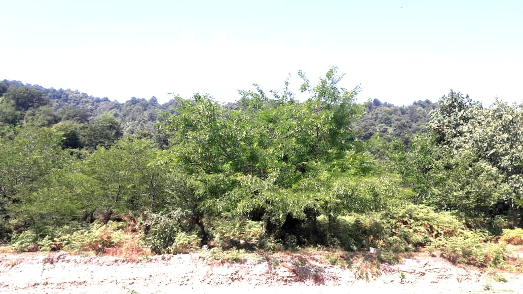 جنگلی ویلا باچشم انداز جنگلی درتالش