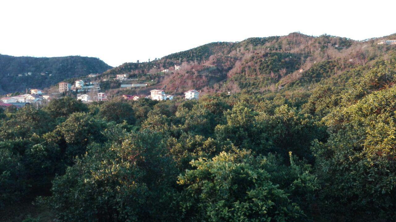 ویلای جنگلی کوهپایه