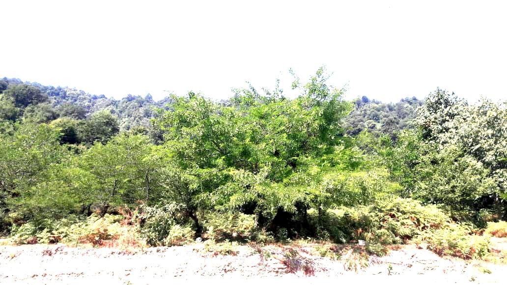 ویلا مشرف به جنگل